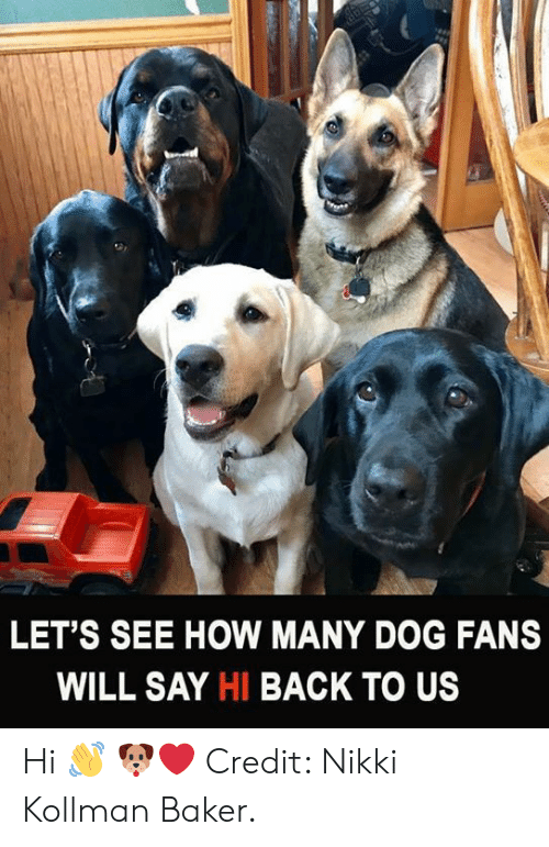 Memes, Back, and 🤖: LET'S SEE HOW MANY DOG FANS  WILL SAY HI BACK TO US Hi 👋 🐶❤️  Credit: Nikki Kollman Baker.