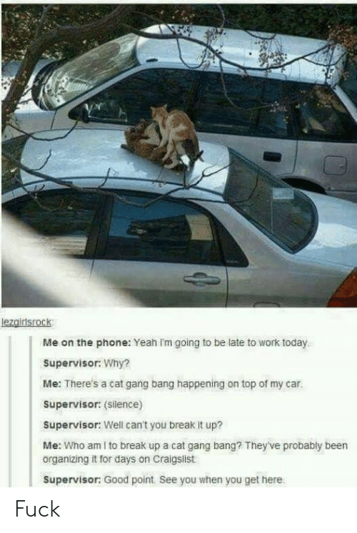 supervisor: lezgirisrock  Me on the phone: Yeah Im going to be late to work today  Supervisor: Why?  Me: There's a cat gang bang happening on top of my car.  Supervisor: (Silence)  Supervisor: Well can't you break it up?  Me: Who am I to break up a cat gang bang? They've probably been  organizing it for days on Craigslist  Supervisor: Good point. See you when you get here Fuck