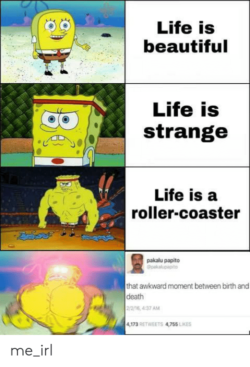 papito: Life is  beautiful  Life is  strange  Life is a  roller-coaster  pakalu papito  Opakalupapito  that awkward moment between birth and  death  2/2/16, 4:37 AM  4,173 RETWEETS 4,755 LIKES me_irl