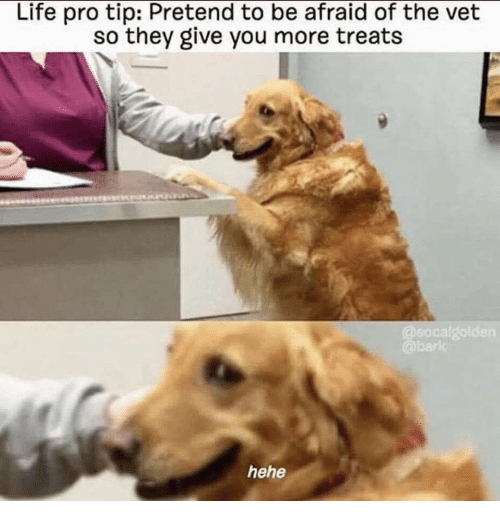 Life, Pro, and They: Life pro tip: Pretend to be afraid of the vet  so they give you more treats  bark  hehe