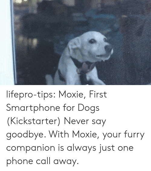 Kickstarter: lifepro-tips:  Moxie, First Smartphone for Dogs (Kickstarter) Never say goodbye. With Moxie, your furry companion is always just one phone call away.