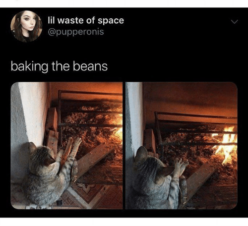 beans: lil waste of space  @pupperonis  baking the beans