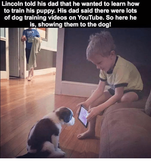 25+ Best Memes About Dog Training