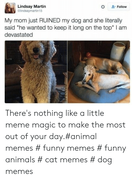 "Animals, Funny, and Funny Animals: Lindsay Martin  @lindsaymartin15  Follow  My mom just RUINED my dog and she literally  said ""he wanted to keep it long on the top"" I am  devastated There's nothing like a little meme magic to make the most out of your day.#animal memes # funny memes # funny animals # cat memes # dog memes"