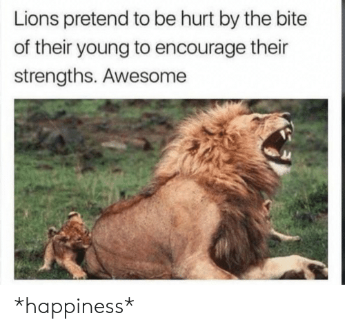 bite: Lions pretend to be hurt by the bite  of their young to encourage their  strengths. Awesome *happiness*