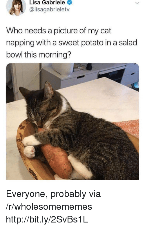 napping: Lisa Gabriele  @lisagabrieletv  Who needs a picture of my cat  napping with a sweet potato in a salad  bowl this morning? Everyone, probably via /r/wholesomememes http://bit.ly/2SvBs1L