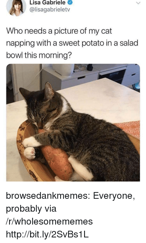 napping: Lisa Gabriele  @lisagabrieletv  Who needs a picture of my cat  napping with a sweet potato in a salad  bowl this morning? browsedankmemes:  Everyone, probably via /r/wholesomememes http://bit.ly/2SvBs1L