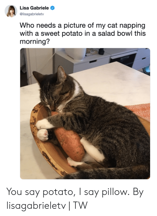 Dank, Potato, and A Picture: Lisa Gabriele  @lisagabrieletv  Who needs a picture of my cat nappin  with a sweet potato in a salad bowl this  morning? You say potato, I say pillow.  By lisagabrieletv | TW