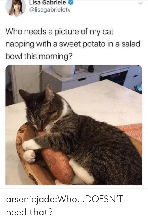 Potato: Lisa Gabriele  @lisagabrieletv  Who needs a picture of my cat  napping with a sweet potato in a salad  bowl this morning? arsenicjade:Who…DOESN'T need that?