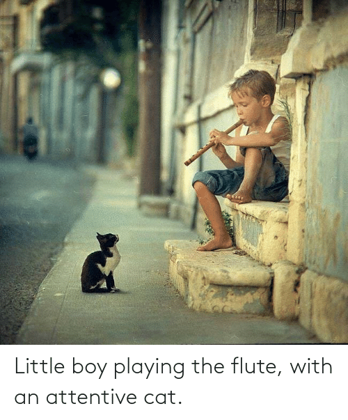 attentive: Little boy playing the flute, with an attentive cat.