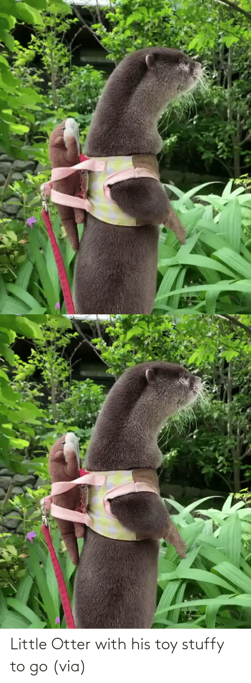 Little: Little Otter with his toy stuffy to go (via)