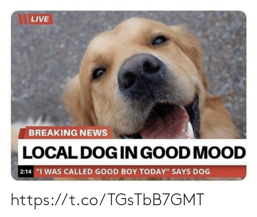 "Memes, Mood, and News: LIVE  BREAKING NEWS  LOCAL DOG IN GOOD MOOD  |2:14 ""I WAS CALLED GOOD BOY TODAY"" SAYS DOG https://t.co/TGsTbB7GMT"