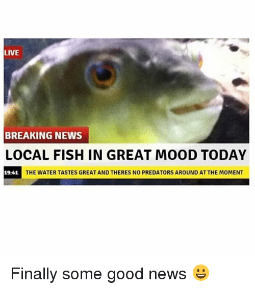 momentous: LIVE  BREAKING NEWS  LOCAL FISH IN GREAT MOOD TODAY  19:41  THE WATER TASTES GREAT AND THERES NO PREDATORS AROUND AT THE MOMENT Finally some good news 😀