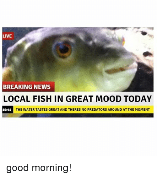 momentous: LIVE  BREAKING NEWS  LOCAL FISH IN GREAT MOOD TODAY  19:41  THE WATER TASTES GREAT AND THERES NO PREDATORS AROUND AT THE MOMENT good morning!