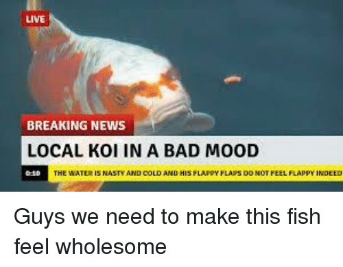Bad, Mood, and News: LIVE  BREAKING NEWS  LOCAL KOI IN A BAD MOOD