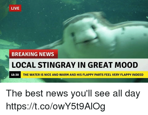 Mood, News, and Best: LIVE  BREAKING NEWS  LOCAL STINGRAY IN GREAT MOOD  18:30  THE WATER IS NICE AND WARM AND HIS FLAPPY PARTS FEEL VERY FLAPPY INDEED The best news you'll see all day https://t.co/owY5t9AlOg