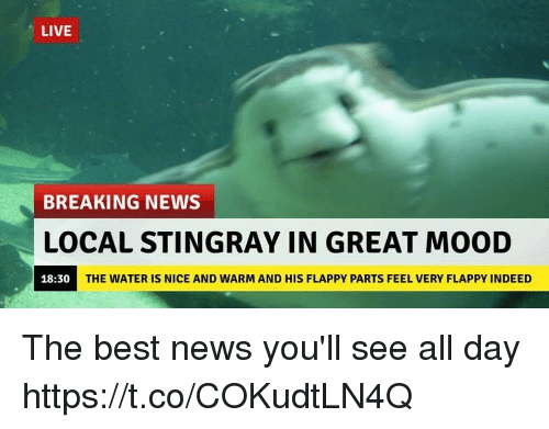 Greates: LIVE  BREAKING NEWS  LOCAL STINGRAY IN GREAT MOOD  18:30  THE WATER IS NICE AND WARM AND HIS FLAPPY PARTS FEEL VERY FLAPPY INDEED The best news you'll see all day https://t.co/COKudtLN4Q