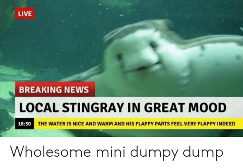 Mood, News, and Breaking News: LIVE  BREAKING NEWS  LOCAL STINGRAY IN GREAT MOOD  18:30  THE WATER IS NICE AND WARM AND HIS FLAPPY PARTS FEEL VERY FLAPPY INDEED Wholesome mini dumpy dump