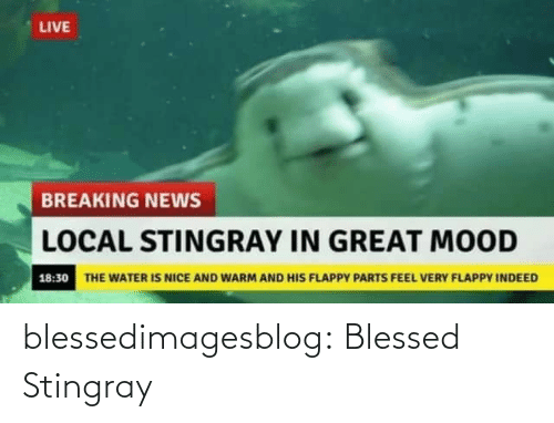 Breaking News: LIVE  BREAKING NEWS  LOCAL STINGRAY IN GREAT MOOD  18:30 THE WATER IS NICE AND WARM AND HIS FLAPPY PARTS FEEL VERY FLAPPY INDEED blessedimagesblog:  Blessed Stingray