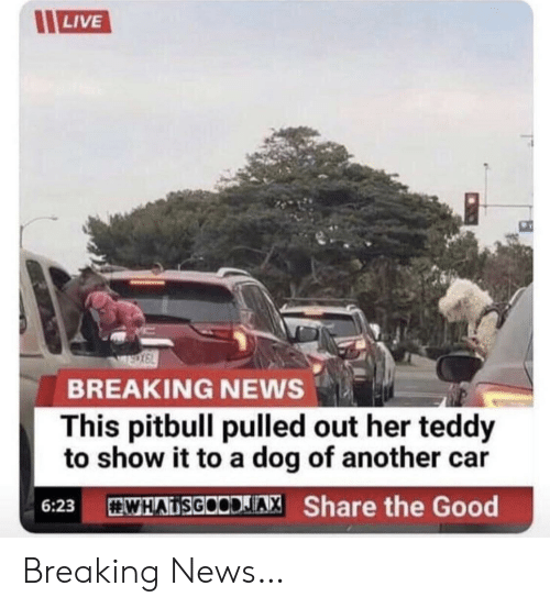 Pulled Out: LIVE  BREAKING NEWS  This pitbull pulled out her teddy  to show it to a dog of another  WHATSGOODIAX Share the Good  6:23 Breaking News…