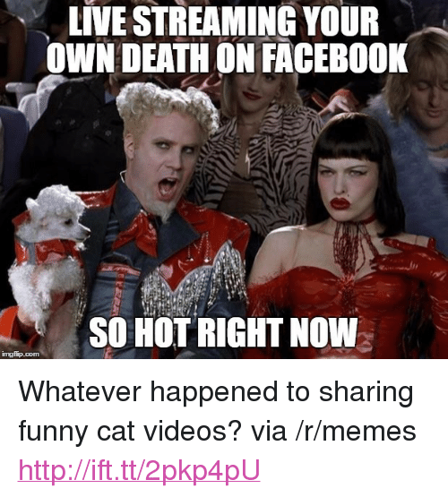 """Funny, Memes, and Videos: LIVE STREAMING YOUR  OWN DEATHON FACEBO0K  SO HOT RIGHT NOW <p>Whatever happened to sharing funny cat videos? via /r/memes <a href=""""http://ift.tt/2pkp4pU"""">http://ift.tt/2pkp4pU</a></p>"""