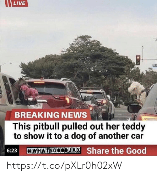 Pulled Out: LIVE  wsox6L  BREAKING NEWS  This pitbull pulled out her teddy  to show it to a dog of another car  WHAISGOODAX Share the Good  6:23 https://t.co/pXLr0h02xW