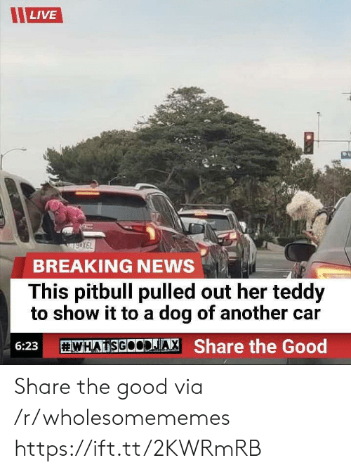 Pulled Out: LIVE  wsoX6L  BREAKING NEWS  This pitbull pulled out her teddy  to show it to a dog of another car  WHATSGOCDJA  Share the Good  6:23 Share the good via /r/wholesomememes https://ift.tt/2KWRmRB