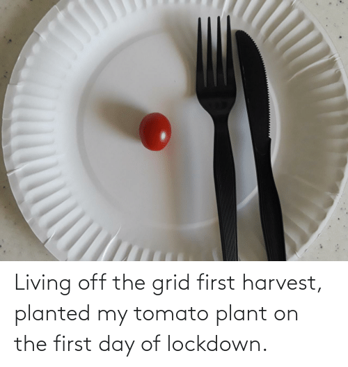 The First: Living off the grid first harvest, planted my tomato plant on the first day of lockdown.