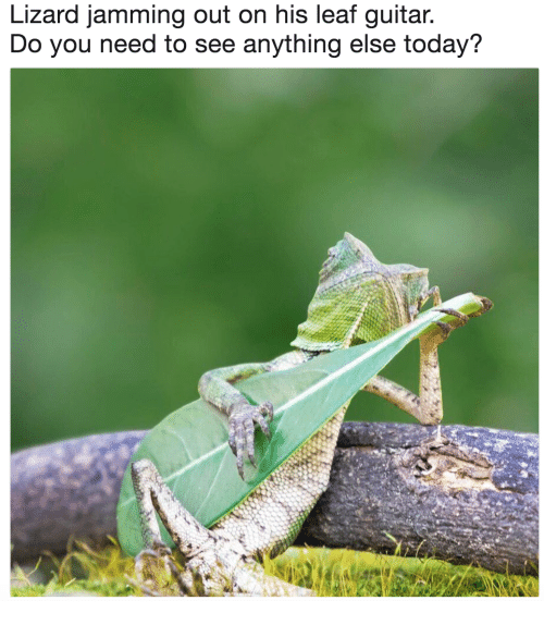 Guitar, Today, and Leaf: Lizard jamming out on his leaf guitar  Do you need to see anything else today?