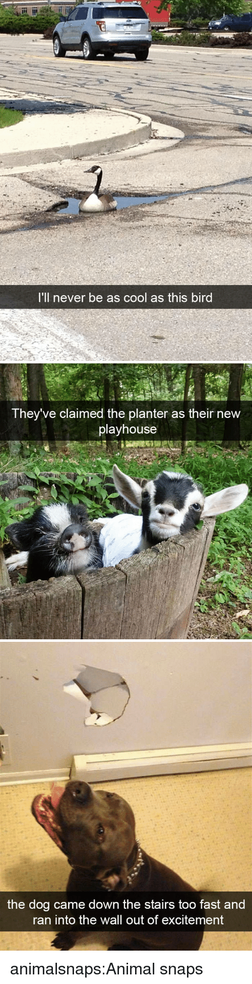 Target, Tumblr, and Animal: 'll never be as cool as this bird   They've claimed the planter as their new  playhouse   the dog came down the stairs too fast and  ran into the wall out of excitement animalsnaps:Animal snaps