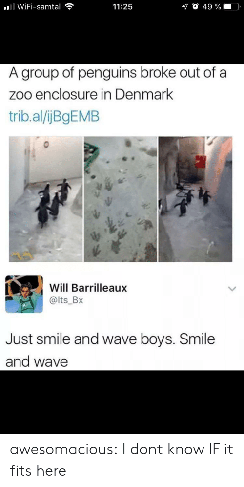 Tumblr, Blog, and Denmark: ll WiFi-samtal  O 49 %  11:25  A group of penguins broke out of a  zoo enclosure in Denmark  trib.al/ijBgEMB  Will Barrilleaux  @lts_Bx  Just smile and wave boys. Smile  and wave awesomacious:  I dont know IF it fits here