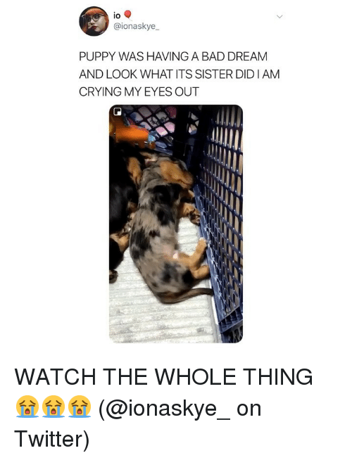 Bad, Crying, and Memes: lo  @ionaskye  PUPPY WAS HAVING A BAD DREAM  AND LOOK WHAT ITS SISTER DIDI AM  CRYING MY EYES OUT WATCH THE WHOLE THING 😭😭😭 (@ionaskye_ on Twitter)