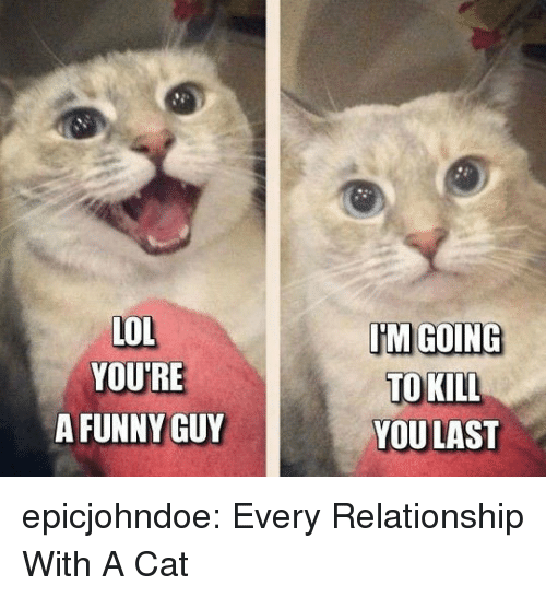Funny, Lol, and Tumblr: LOL  YOURE  A FUNNY GUY  TM GOING  TO KILL  YOULAST epicjohndoe:  Every Relationship With A Cat