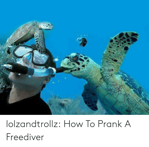 Prank, Tumblr, and Blog: lolzandtrollz:  How To Prank A Freediver