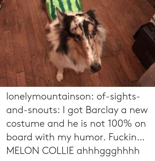 collie: lonelymountainson: of-sights-and-snouts:  I got Barclay a new costume and he is not 100% on board with my humor.  Fuckin…MELON COLLIE ahhhggghhhh