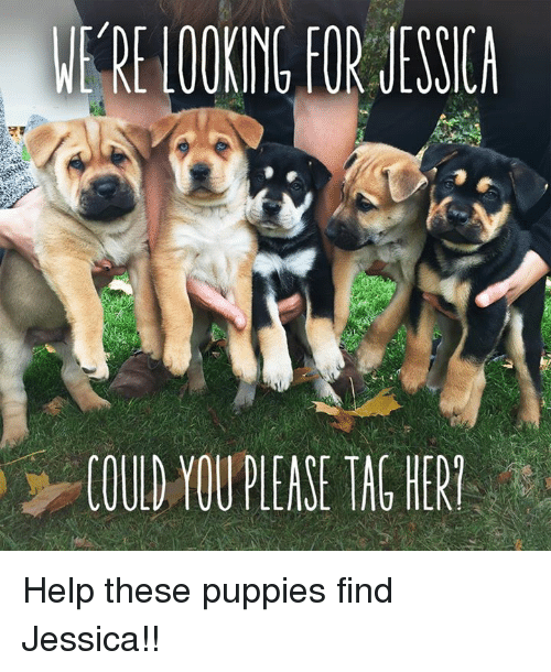 Memes, Puppies, and Puppy: LOOING FOR JESSICA  COULD YOUPIEASE TAC HERT Help these puppies find Jessica!!