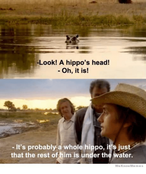Head, Water, and Rest: -Look! A hippo's head!  - Oh, it is!  - It's probably a whole hippo, it's just  that the rest offhim is under the water.  WeKnowMemes