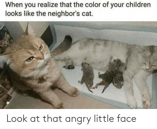 Angry: Look at that angry little face