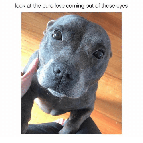 Love, Pure, and Look: look at the pure love coming out of those eyes
