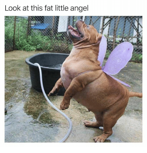Angel, Fat, and Look: Look at this fat little angel