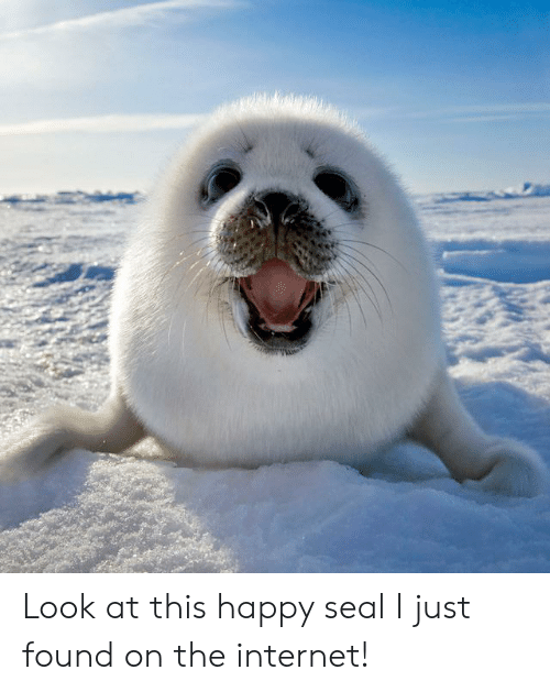 Internet, Happy, and Seal: Look at this happy seal I just found on the internet!