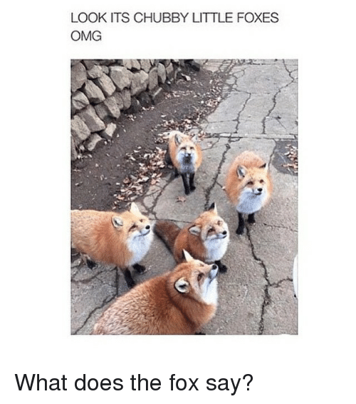 The Fox Say: LOOK ITS CHUBBY LITTLE FOXES  OMG What does the fox say?