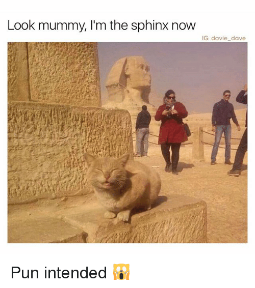 pun intended: Look mummy, I'm the sphinx now  IG: davie dave Pun intended 🙀