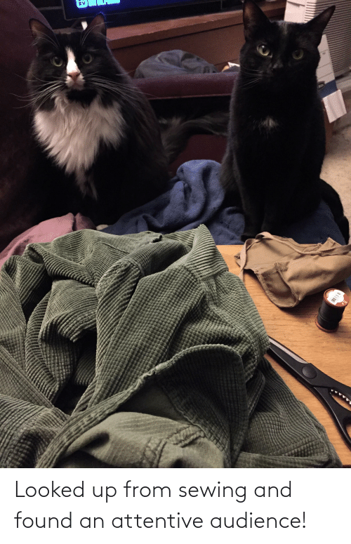 attentive: Looked up from sewing and found an attentive audience!