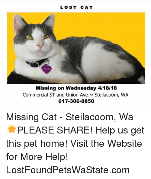 Memes, Lost, and Help: LOST CAT  Missing on Wednesday 4/18/18  Commercial ST and Union Ave Steilacoom, WA  617-306-8850 Missing Cat - Steilacoom, Wa  🌟PLEASE SHARE! Help us get this pet home!  Visit the Website for More Help! LostFoundPetsWaState.com