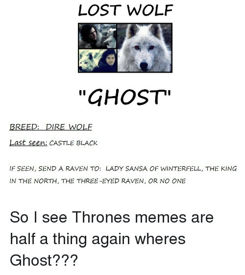 """Memes, Lost, and Black: LOST WOLF  """"GHOST""""  BREED: DIRE WOLF  Last seen: CASTLE BLACK  IF SEEN, SEND A RAVEN TO: LADY SANSA OF WINTERFELL, THE KING  IN THE NORTH, THE THREE-EYED RAVEN, OR NO ONE So I see Thrones memes are half a thing again wheres Ghost???"""