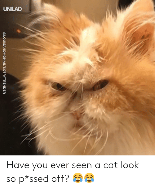 Cat Look: @LOUISANDMONAE/SOTRYTRENDER Have you ever seen a cat look so p*ssed off? 😂😂