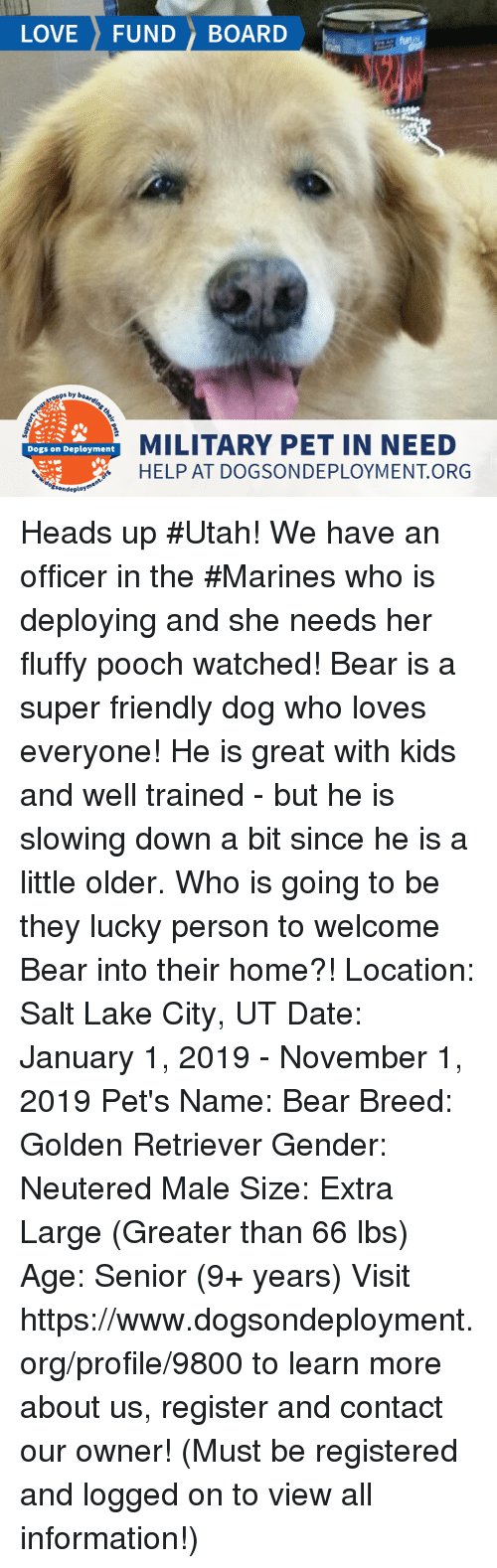 Dogs, Love, and Memes: LOVE FUND BOARD  ops by  MILITARY PET IN NEED  HELP AT DOGSONDEPLOYMENT ORG  Dogs on Deployment  sonde Heads up #Utah! We have an officer in the #Marines who is deploying and she needs her fluffy pooch watched! Bear is a super friendly dog who loves everyone! He is great with kids and well trained - but he is slowing down a bit since he is a little older.  Who is going to be they lucky person to welcome Bear into their home?!  Location: Salt Lake City, UT Date: January 1, 2019 - November 1, 2019   Pet's Name: Bear Breed: Golden Retriever Gender: Neutered Male Size: Extra Large (Greater than 66 lbs) Age: Senior (9+ years)  Visit https://www.dogsondeployment.org/profile/9800 to learn more about us, register and contact our owner! (Must be registered and logged on to view all information!)