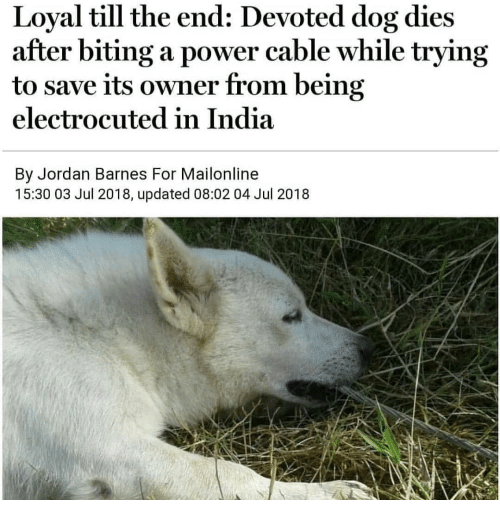 electrocuted: Loyal till the end: Devoted dog dies  after biting a power cable while trying  to save its owner from being  electrocuted in India  By Jordan Barnes For Mailonline  15:30 03 Jul 2018, updated 08:02 04 Jul 2018