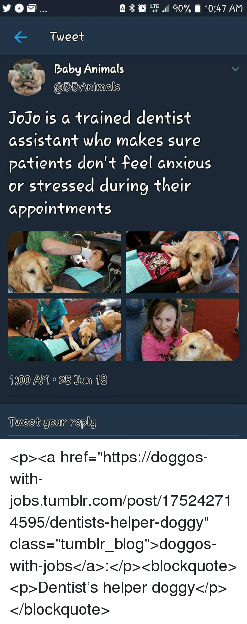"""Animals, Tumblr, and Blog: LTE.al 90%  10:47 AM  Tweet  Baby Animals  @RBAnimals  JoJo is a trained dentist  assistant who makes sure  patients don't feel anxious  or stressed during their  aקקointments  Tueet your reply <p><a href=""""https://doggos-with-jobs.tumblr.com/post/175242714595/dentists-helper-doggy"""" class=""""tumblr_blog"""">doggos-with-jobs</a>:</p><blockquote><p>Dentist's helper doggy</p></blockquote>"""